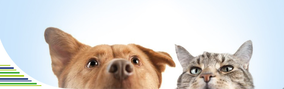 Domácí odčervování psů a koček