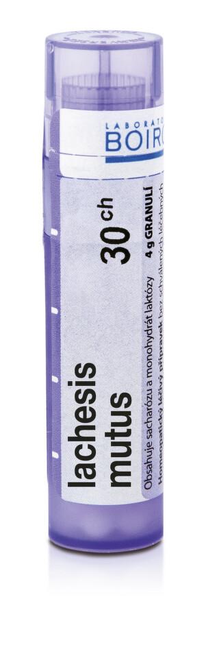 LACHESIS MUTUS 30CH granule 4G