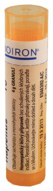 ACONITUM NAPELLUS perorální granule 4GM 3CH-30CH