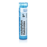 CAULOPHYLLUM THALICTROIDES 9CH granule 1X4G